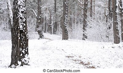 Black dog runs quickly to camera in snowy forest. It is...