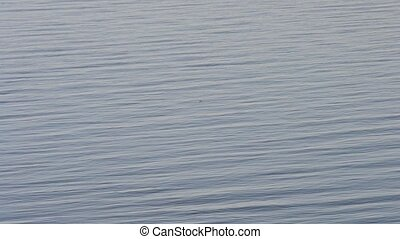 Calm water surface with a bird flying on background of water...