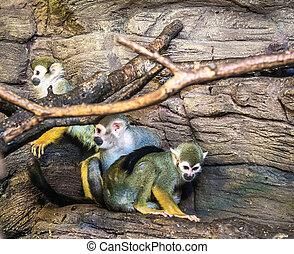 primate colony