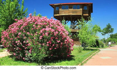 Bird watching tower and oleanders - Bird watching tower and...