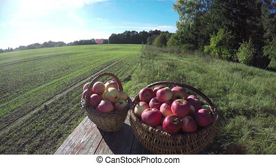 Apples in wicker baskets, 4K - Apples in two wicker baskets...