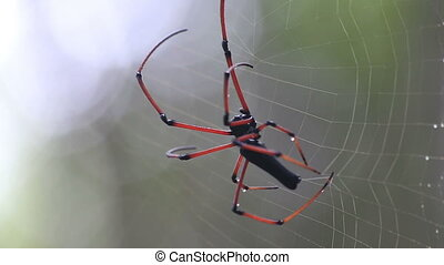 Spider at work - Spider makes web Closeup high quality video...