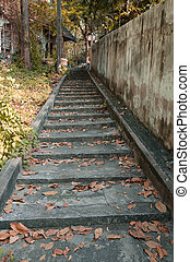 Abandoned staircase and overgrown plants.