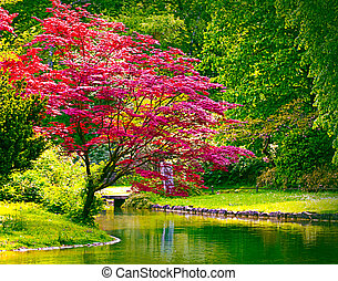 red maple and pond in idyllic garden - beautiful red maple...