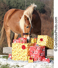 Beautiful horse with christmas gifts - Beautiful chestnut...