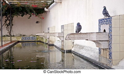 Patio with water pool and doves at Igreja de Sao Vicente de...