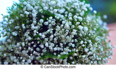 puffy white bouquet flower plant - puffy small white bouquet...