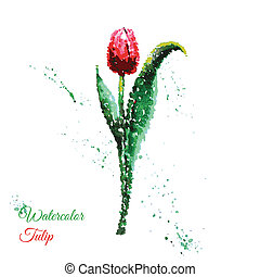 Vector tulip watercolor Illustration for greeting cards,...