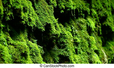 Moss Shades State Park Indiana - Moss and water droplets...