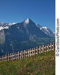 Meadow With Flowers In Front Of The Eiger