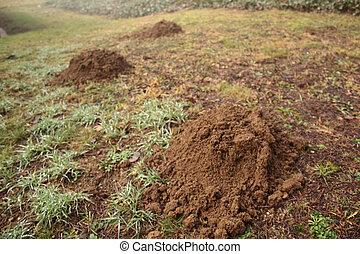 molehill - Molehill on a green meadow in a landscape