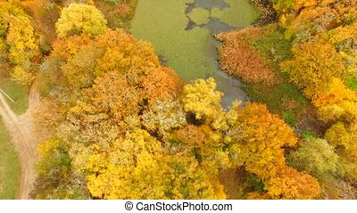 AERIAL VIEW. Lake And Trees In Bright Autumn Colours