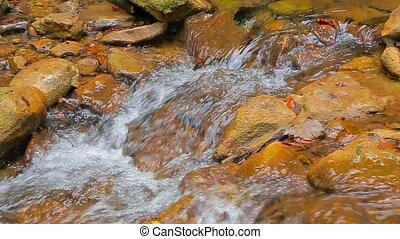 Small Stream Flowing Down Among Stones - Beautiful small...