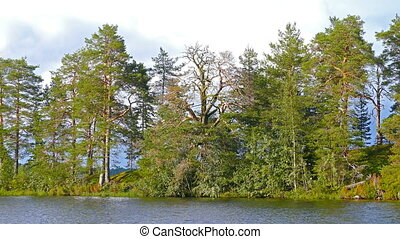 landscape with trees and lake in Karelia
