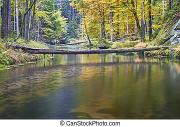 Autumn river with trees