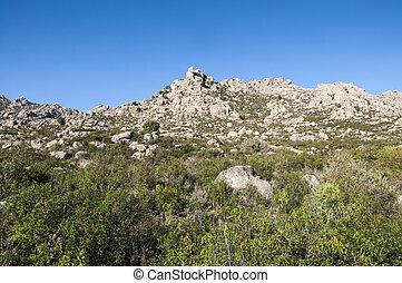 śródziemnomorski, roślinność,