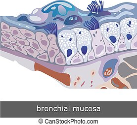 Bronchial Mucosa Scheme - Structure of damaged bronchial...