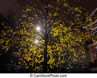 City lantern light through the leaves of autumn tree