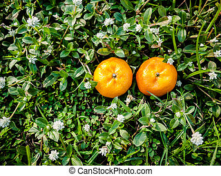 Couple Orange fruits