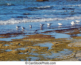 Rocky shore of Caspian Sea - Rocky shore of the Caspian Sea...