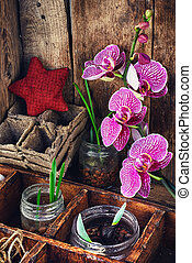 Plant breeding in the spring - Germinated seeds of flowers...