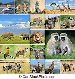 Collage with photo african animals - African wild animals...