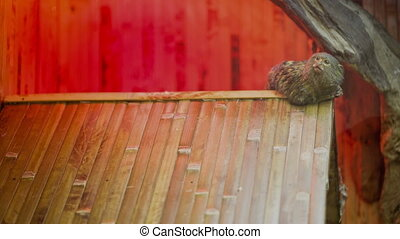 Monkey On the Roof - Monkey on the roof at zoo