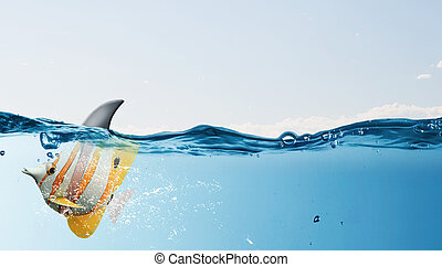 Exotic fish with shark flip