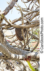 Honeycomb and swarm of bees on a tree branch
