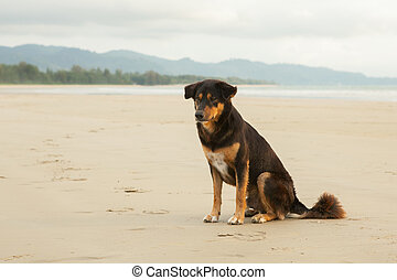 Stray dogs on beach in the evening