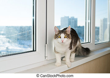 Young cat sitting on  window sill