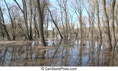 Spring Forest Suffering From Heavy Flood - This is a shot of...