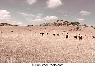 Pasture - Cows Grazing on a Meadow of the European Peaks,...