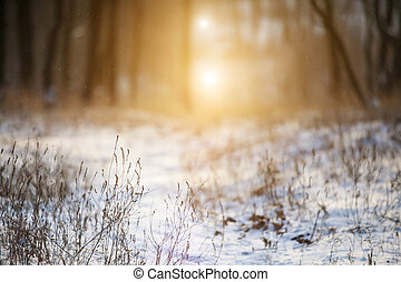 Snow clearing in the forest - Snow clearing in the rays of...