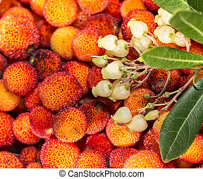 Arbutus flowers and leaves. Close-up.