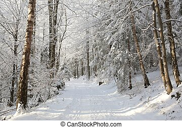 Path through winter forest - Path through the forest on a...