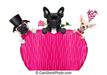 fila,  Valentines, perro, día