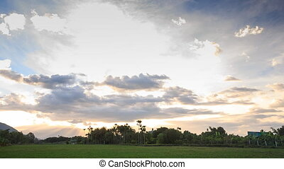 Sunset Clouds in Blue Sky above Rice Field Trees - grey...
