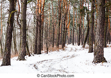 Dirt road in the winter coniferous forest in the cloudy day