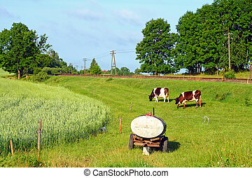 Rural scene - Cows and the water tank at the countryside