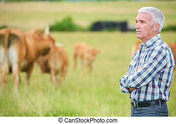 man looking at the cattles