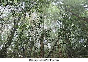 Tropical forest in thailand - The forests are abundant, Many...