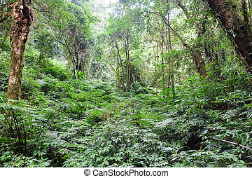 Tropical forest - The forests are abundant, Many kinds of...