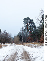 Dirt road in the winter forest in the cloudy day