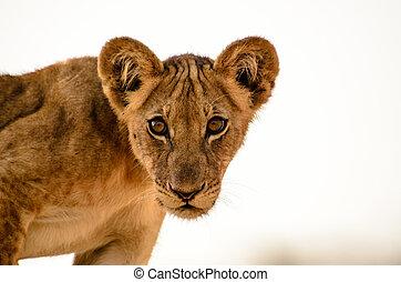 Head shot of an Inquisitive Cub - Head shot of an...