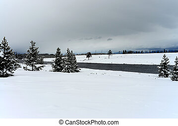 Madison River Yellowstone - Madison River and Douglas Fir...