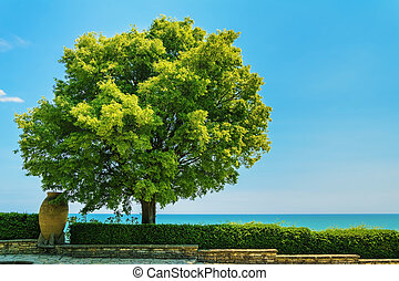 Tree with Lush Foliage against a Blue Sky
