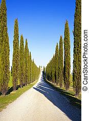 Europa, Droga, Włochy, cyprys,  Tuscany, Drzewa, Wiejski