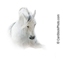 white spanish stallion - Pure white spanish stallion over a...