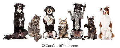 Group of Dogs and Cats Together Begging - Row of cats and...